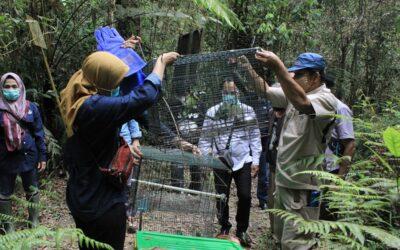 ISCP & BKSDA Sumut lepasliarkan 7 individu Kukang dan satwa liar lainnya di kawasan hutan Dairi